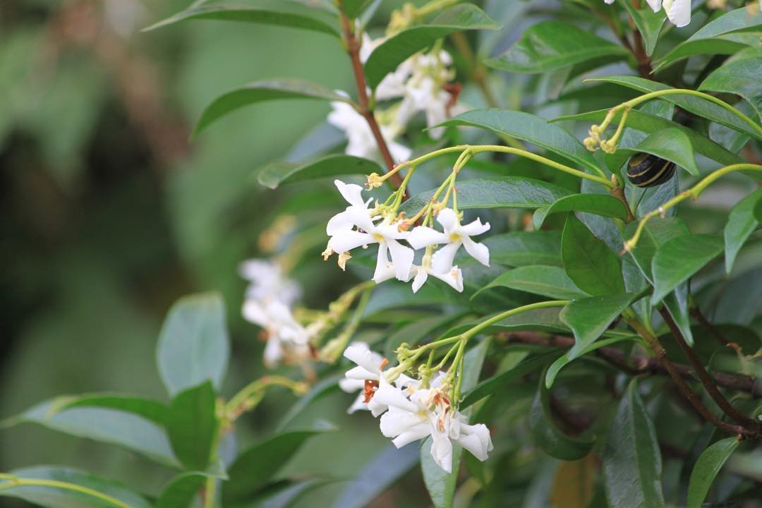 breatheseptember2016 Day 23 Smell The jasmine is almost over buthellip