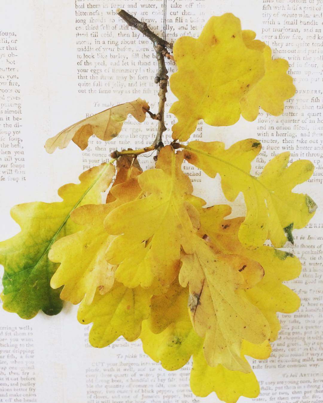 yellowmonday coloursoftheweek coloursofnature autumnleaves oakleaves leavesonlyleaves Continue reading rarr