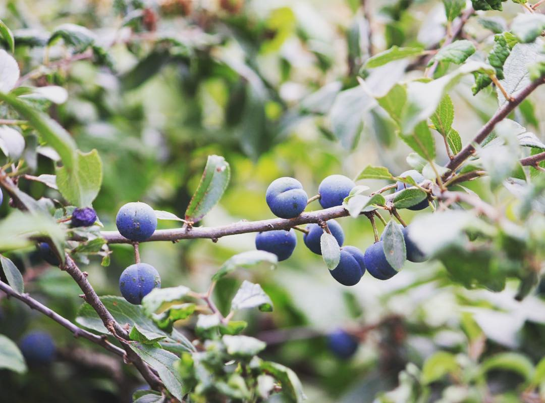 Blue sloes for Blue Saturday     hellip