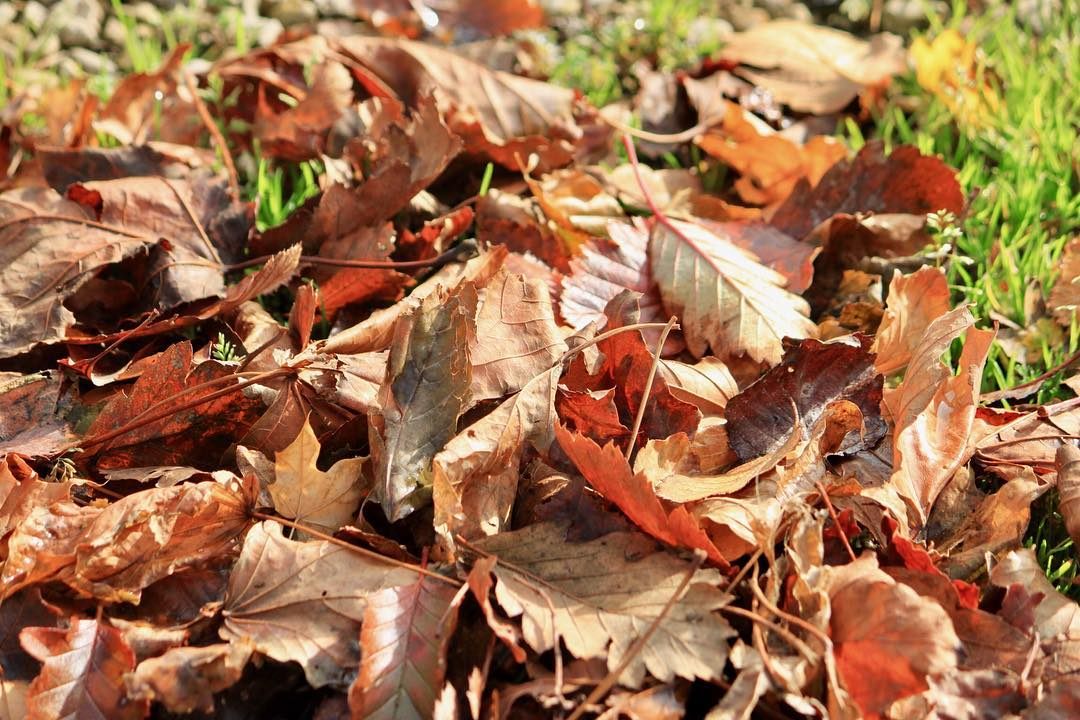 Autumn leaves Continue reading rarr