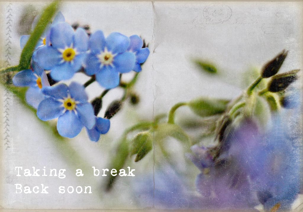 Forgetmenot postcard