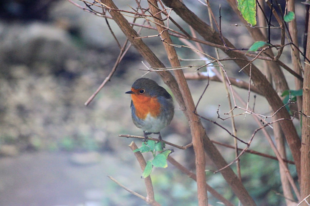 Week 3 Robin 2