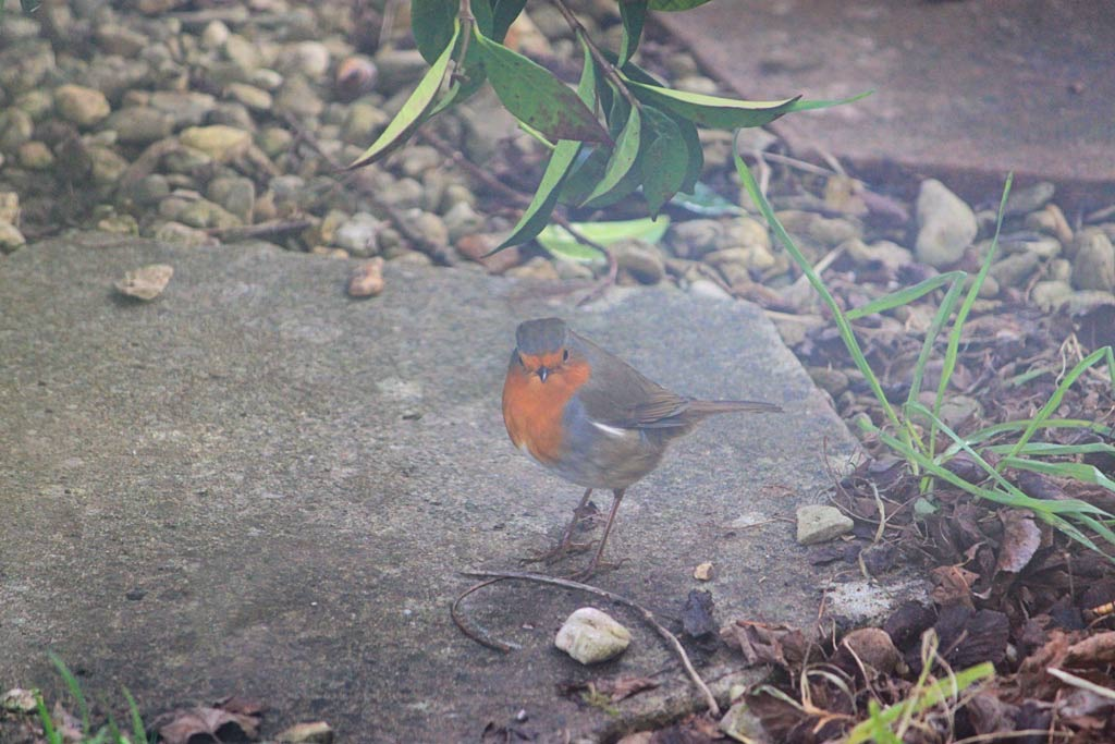 Week 3 Robin 3