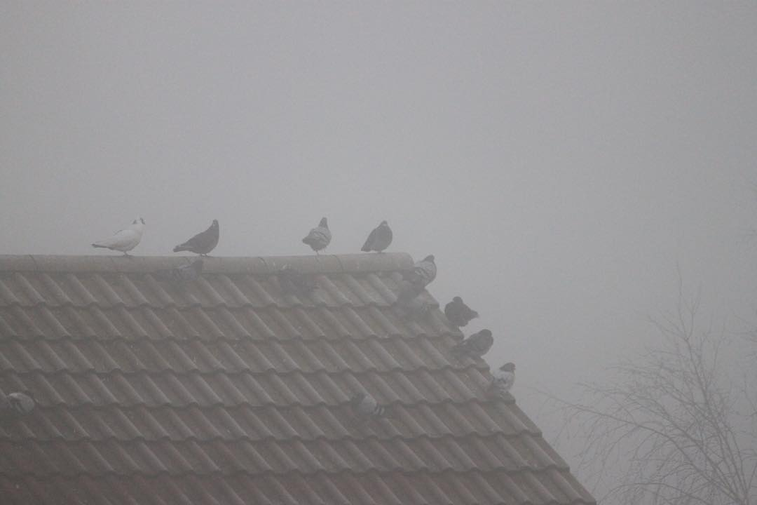 Misty morning on pigeon corner here in the south westhellip