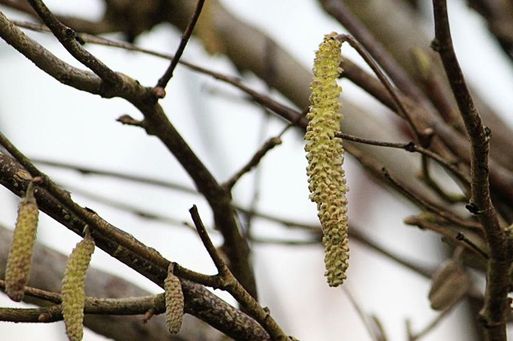signsofspring catkin nothingisordinary naturelover Continue reading rarr