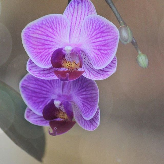 I have another flower on my orchid for purpletuesday coloursofnaturehellip