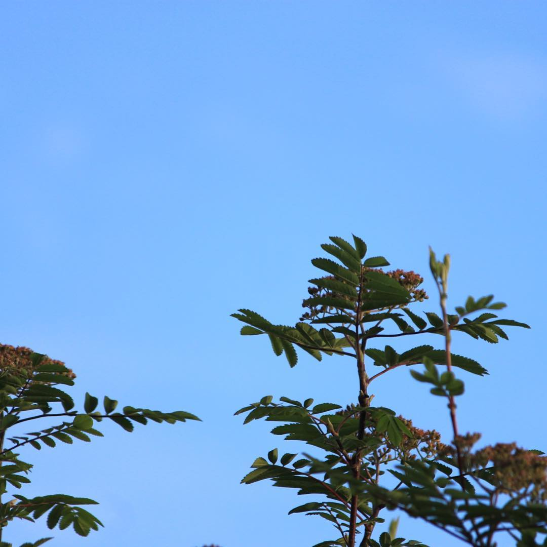 Early morning blue sky for Saturday    hellip