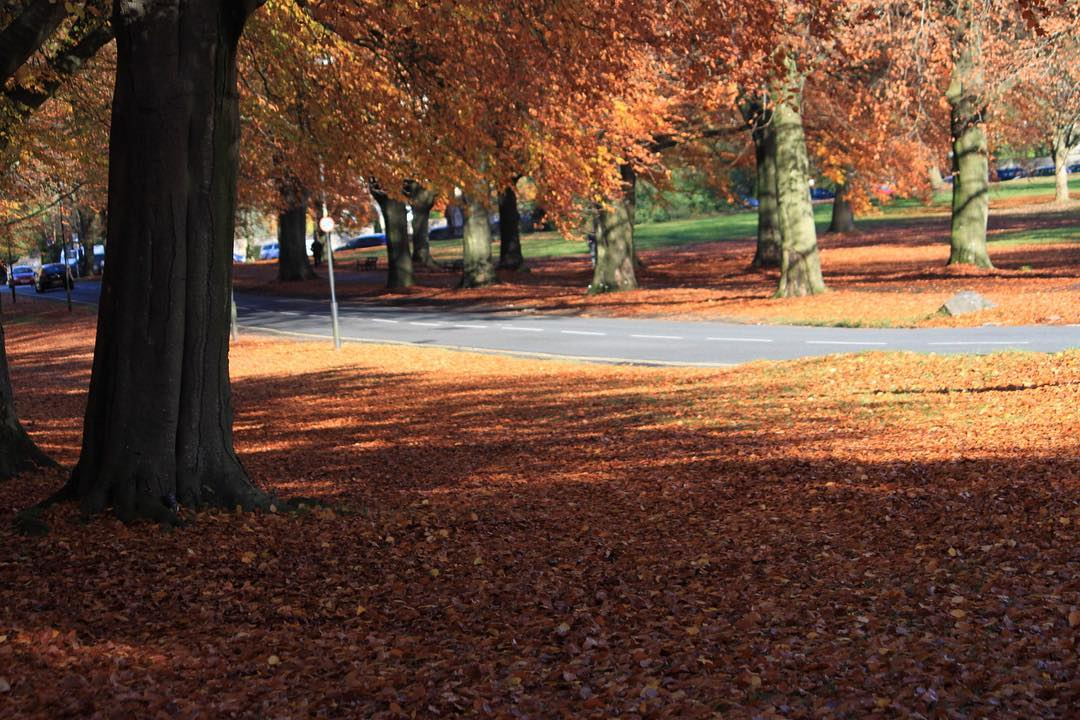 Can you cope with more autumn leaves?   hellip